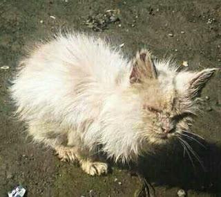Penyakit Kucing Yang Menular Pada Manusia