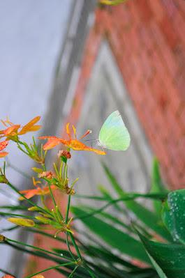 Yellow butterfly at Yiu Chung Yee Museum