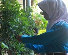Tiga Siswa SMP N 5 Pati Ciptakan Sabun dari Daun Pucuk Merah