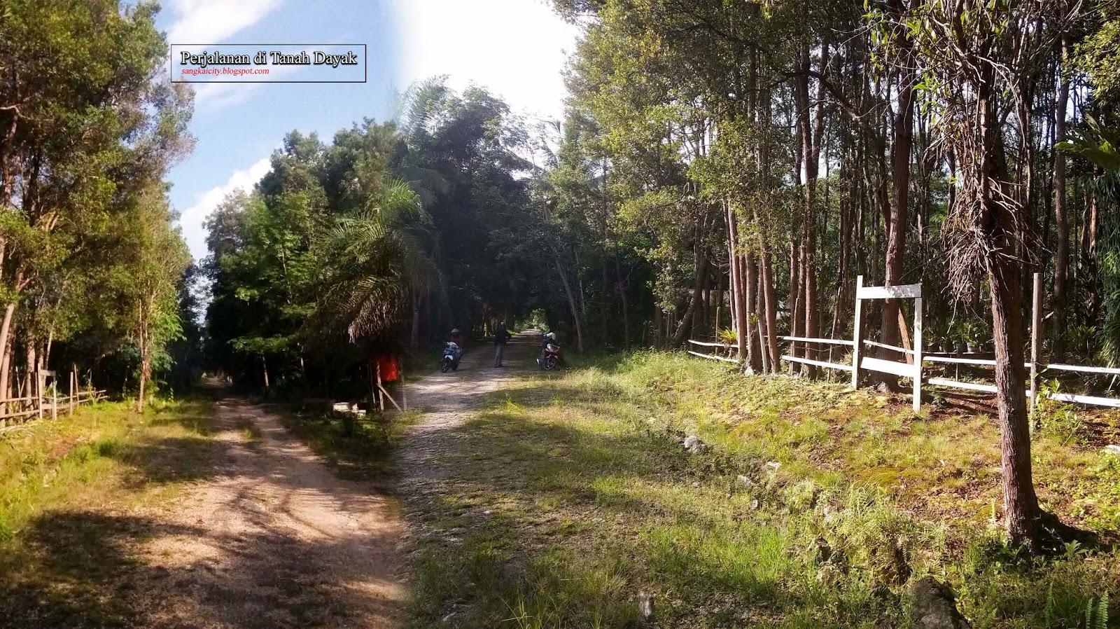Sanggu Desa Wisata Barito Selatan Sangkay City