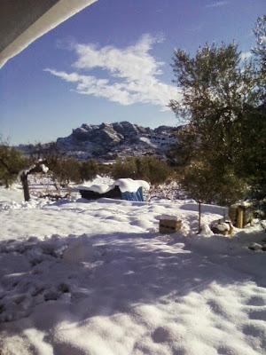 clima, Beceite, nieve, frío, nevada, está nevando, Beseit, neu, olivares