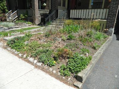 Monarch Park spring garden cleanup before by Paul Jung Gardening Services Toronto
