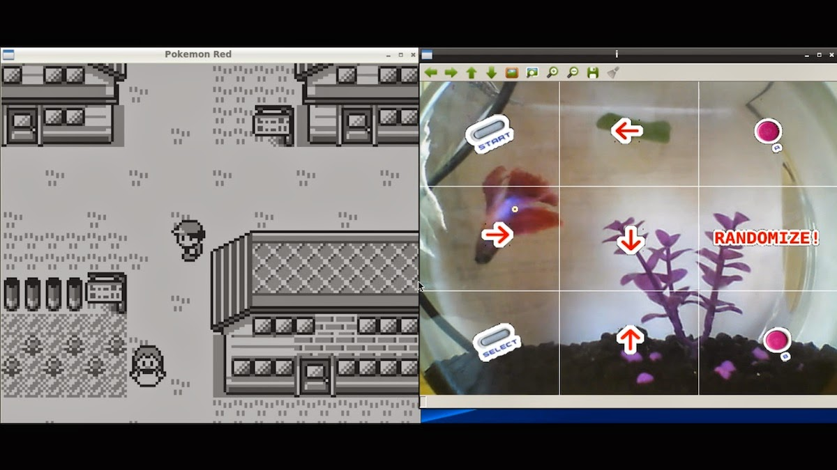 Live Stream of Fish Playing Pokemon Red