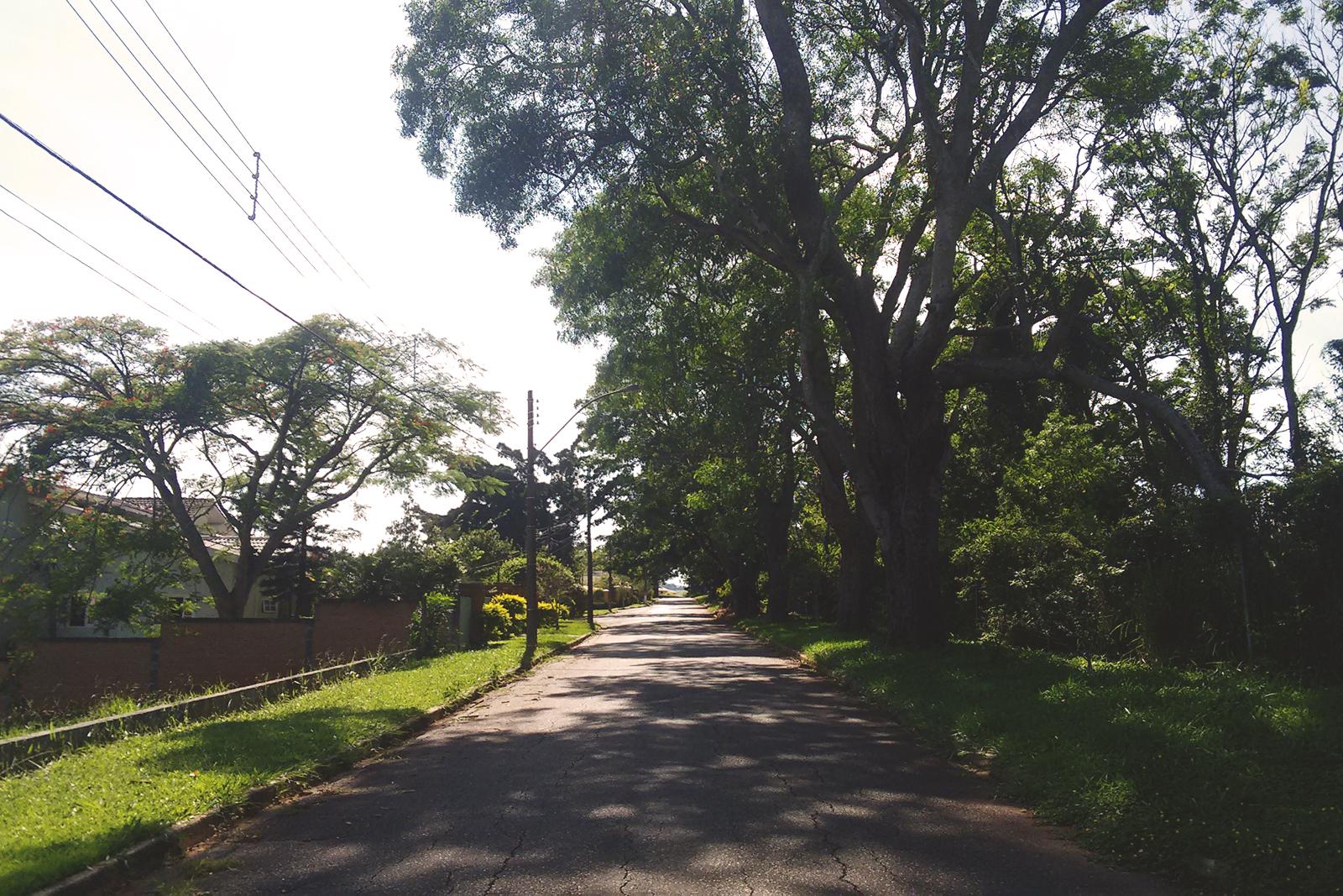 caminho rua arborizada