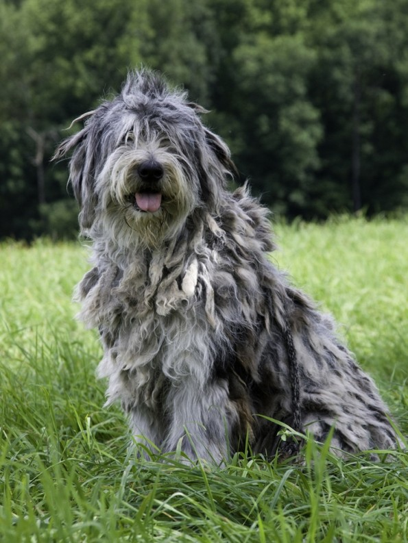 5 Unique Dog Breeds You May Never Come Across
