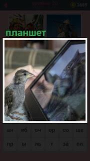 птица перед планшетом смотрит на кошку внутри