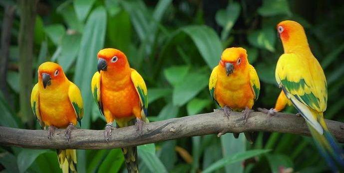largest bird sanctuary in world