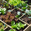 Beginner's Tips For A Successful Vegetable Garden