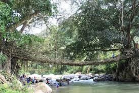 Ini Dia Mitos Dan Sejarah Jembatan Akar
