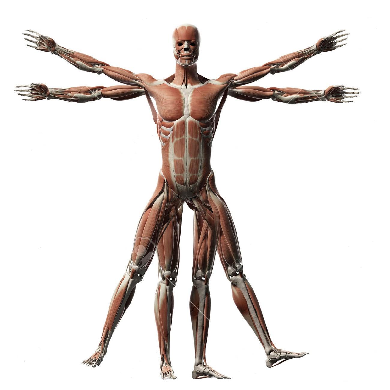 A mover el sistema muscular | AngelesLunaSolTeatro