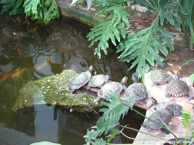 Ботанический сад ТГУ: сибирские тропики