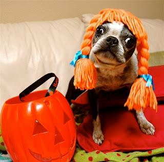 dog-halloween-costumes