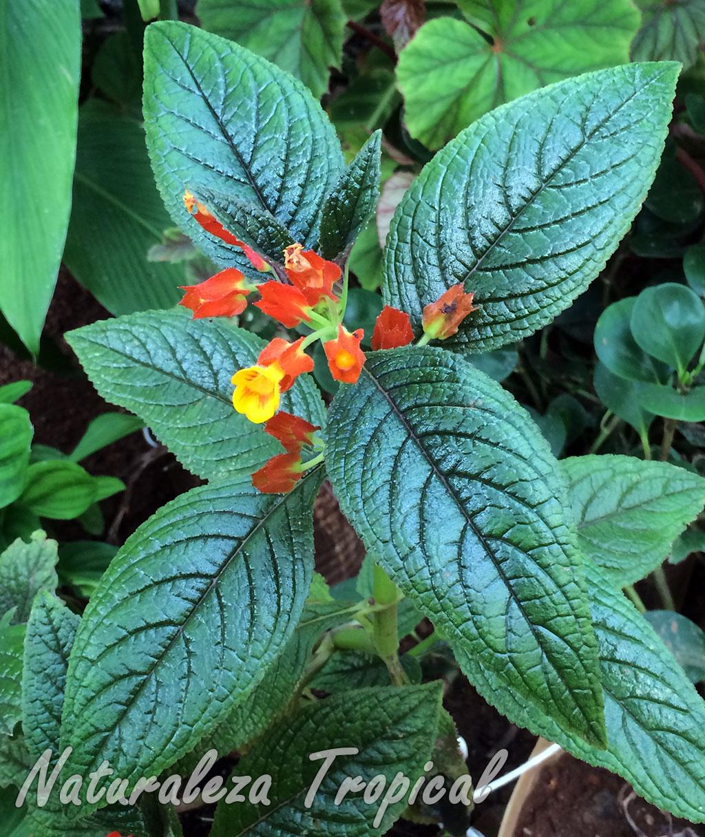 Naturaleza tropical una planta con hojas met licas y for Una planta ornamental