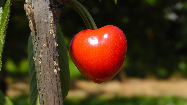 Tratamiento Artritis Reumatoide cerezas