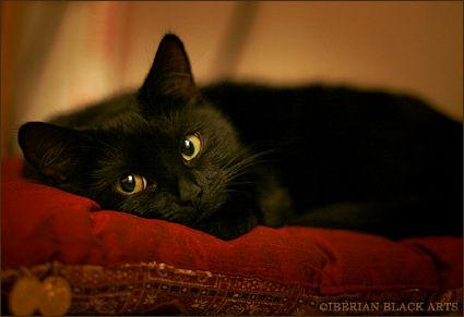 Кот по поверьям