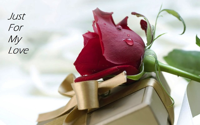 Happy Rose Day Greetings