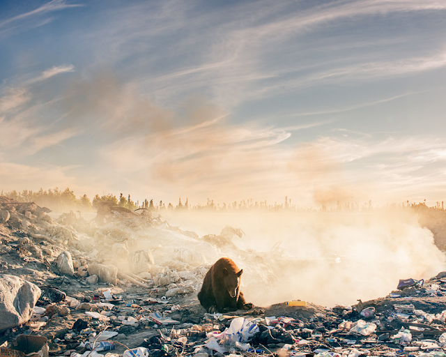 Troy Moth's photo of a bear living in a landfill
