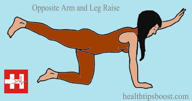 healthtipsboost.com health tips boost opposite arm and leg raise workouts exercise
