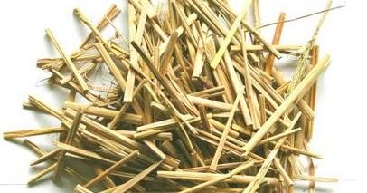 Manfaat dan Kandungan Gizi dalam Jamur Tiram