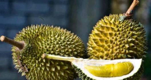 Durian - Makanan Khas Indonesia Yang Tidak Disukai Oleh Bule