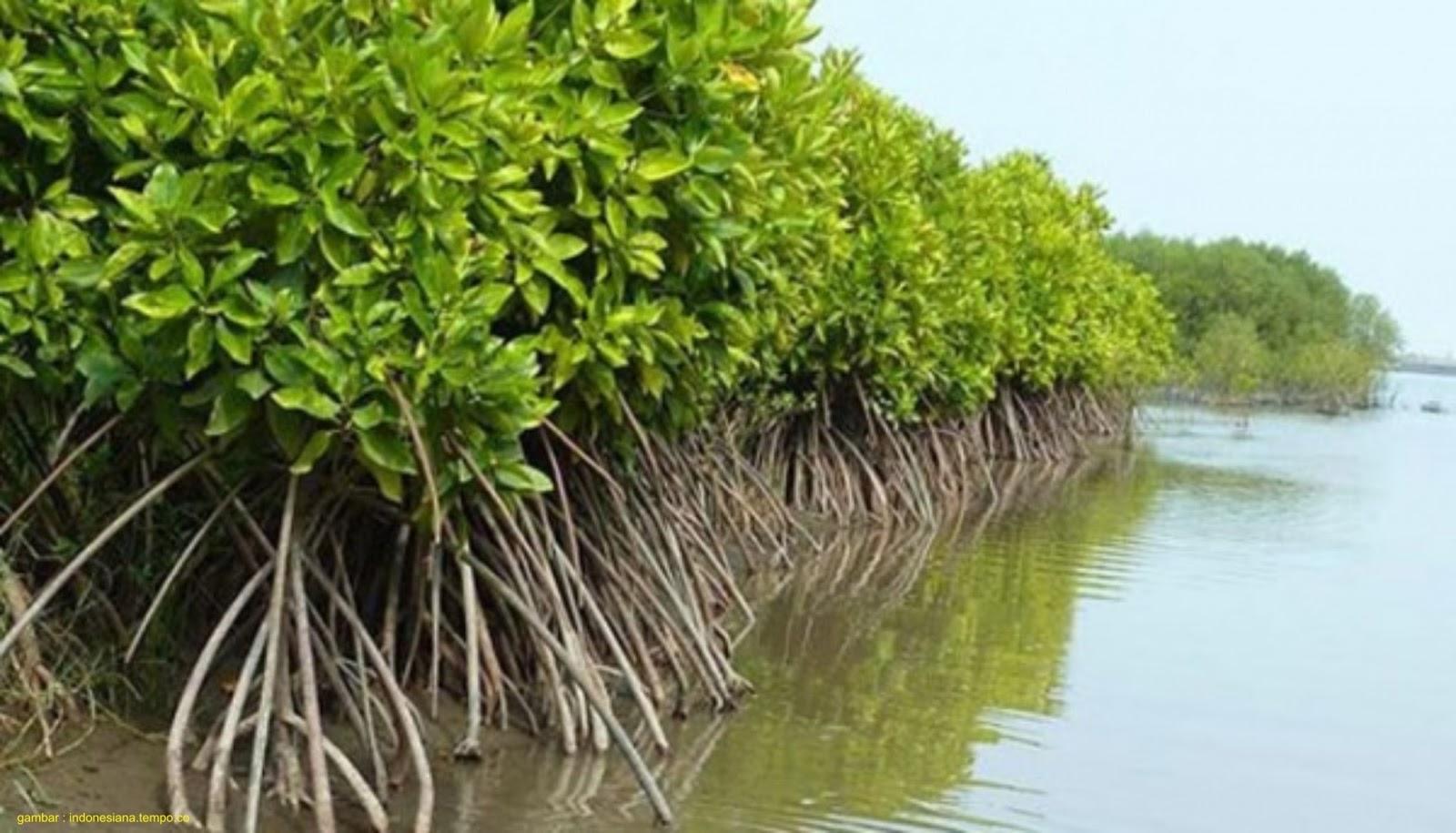 Peraturan Perundang - Undangan Terkait Pengelolaan Mangrove ~ AanBLOG