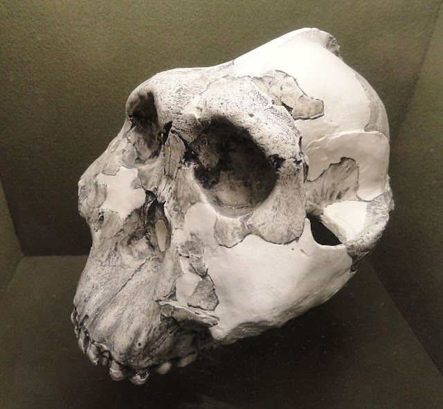 New analytical tools are reshaping our knowledge of ancient humans