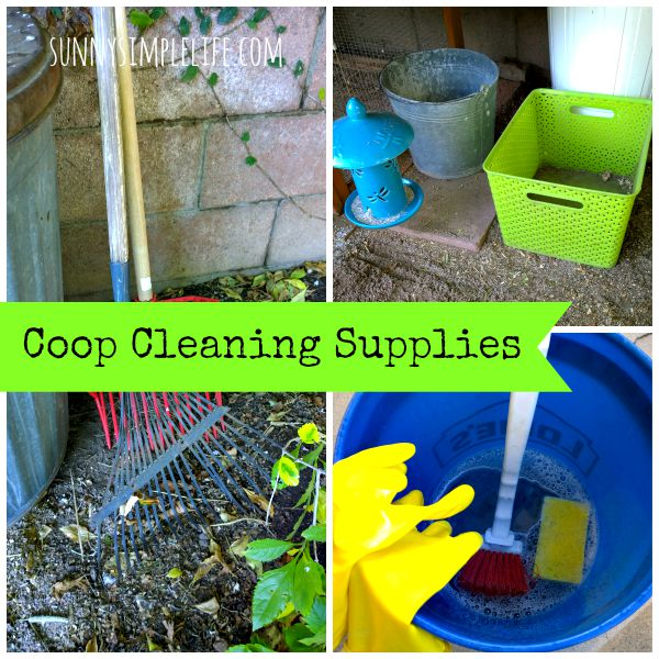 how to clean chicken coop run