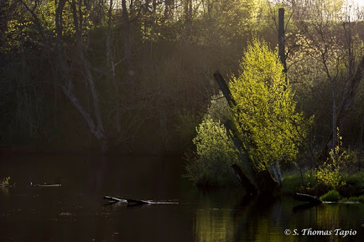 Spring time by river Helge