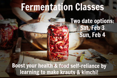 fermentation classes