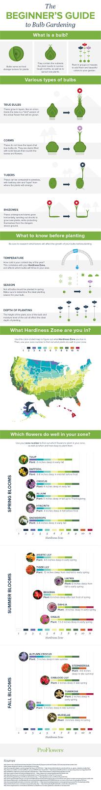 ://www.proflowers.com/blog/beginners-guide-bulb-gardening