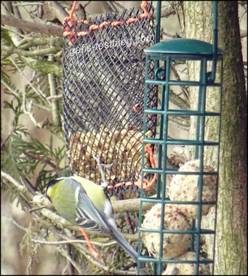 Nussstation oder Nussbeutel für Vögel im Garten basteln