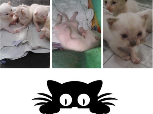 meus gatinhos
