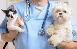 Cuidado de la salud de su mascota | Cómo mantener a su perro o gato sanos y felices