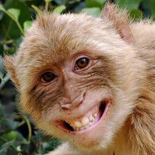 Ramalan Shio Monyet 2016