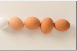 The Truth of Nutrition In Eggs and Incorrect Myths