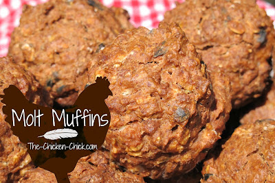 Homemade molt muffins are a great supplement to a molting chicken's diet.