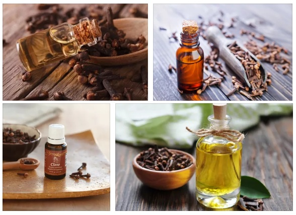 Health Benefits of Clove Essential Oil