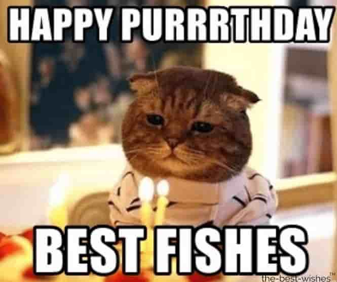 cat memes for happybday