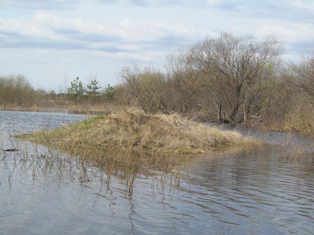 маленький островок, где чайки устроили гнездо