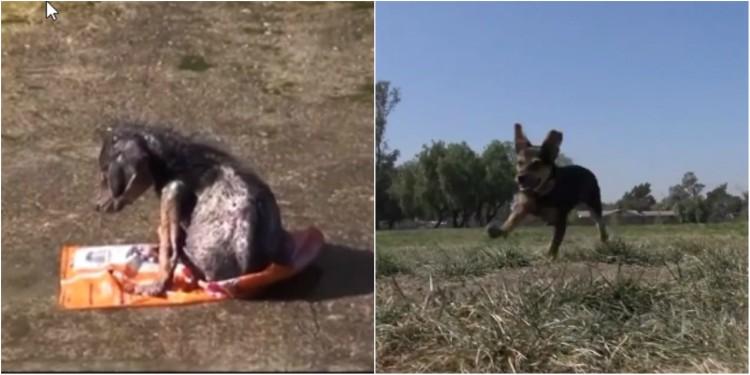 Όταν βρήκαν αυτό το κουτάβι  ήταν έτοιμο να πεθάνει..όμως η αγάπη κάνει θαύματα!!! (βίντεο)