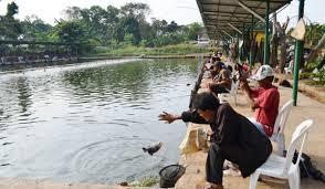 http://aquaticessen.blogspot.com/2017/01/umpan-jitu-ikan-mas-harian-2017.html