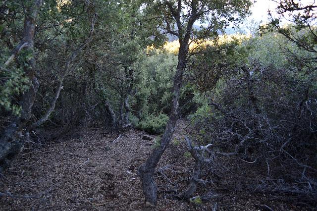slot in the oaks