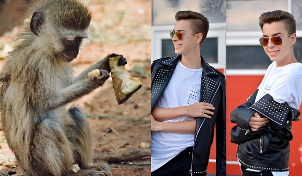 essende meerkatze und ein outfit