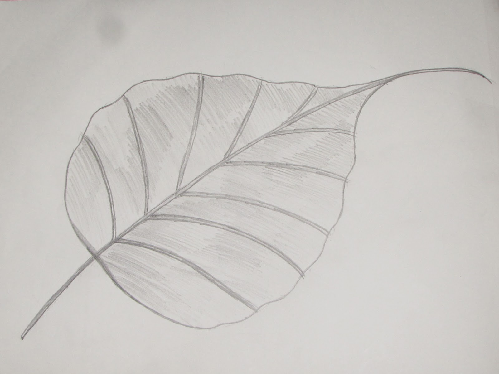 How to draw and sketch ficus religiosa peepal leaf 6