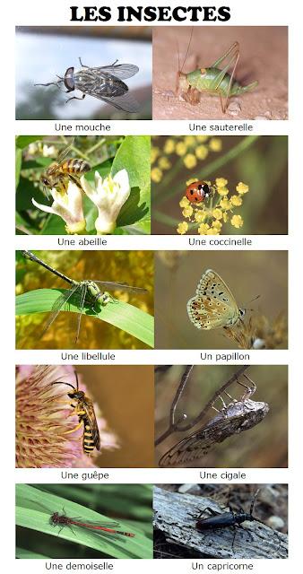 Zwierzęta - owady - Francuski przy kawie