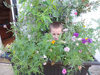 trough of flowering annuals school project