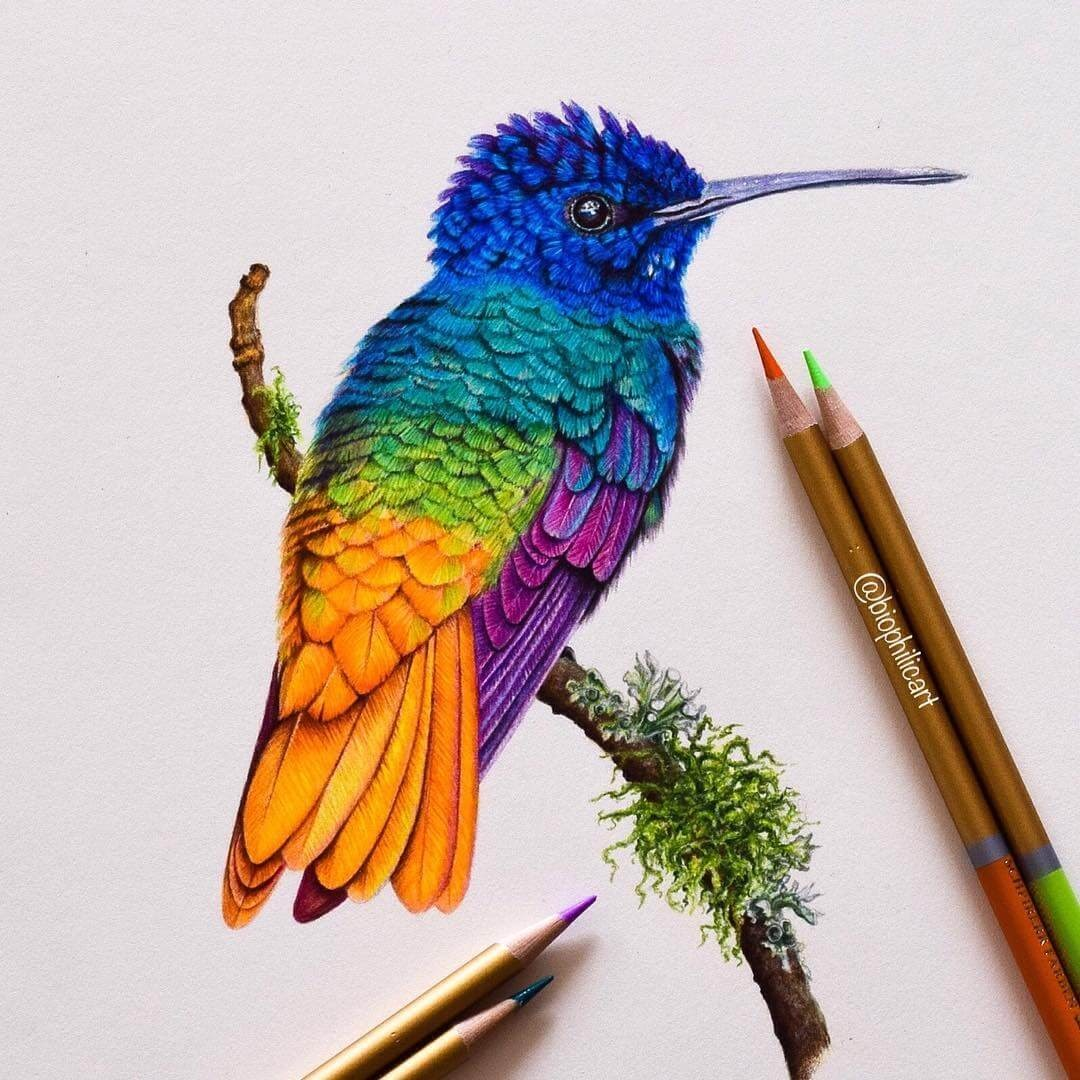 03-Hummingbird-Sallyann-Brightly-Colored-Animal-Pencil-Drawings-www-designstack-co