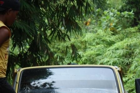 menanam bambu di ruteng flores 2