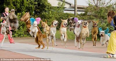 tafsiran mimpi dikejar anjing, ramalan mimpi dikejar anjing, arti mimpi dikejar kejar anjing, mimpi dikejar anjing gila, mimpi dikejar anjing artinya apa, mimpi dikejar anjing coklat, mimpi dikejar anjing galak, mimpi dikejar anjing dan kucing, mimpi dikejar anjing, arti dari mimpi digigit anjing, mimpi anjing 4d, mimpi anjing masuk rumah, mimpi anjing jinak, mimpi anak anjing, mimpi dijilat anjing,
