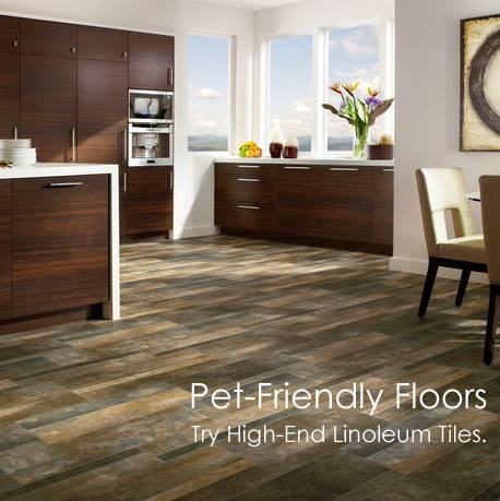 Modern Paint And Floors Blog Pet Friendly Floors High